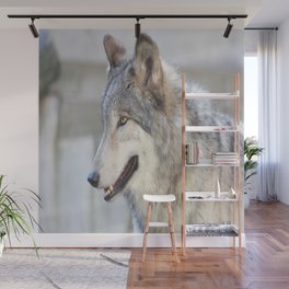 Bright Eyes and Fluffy Coat Wall Mural