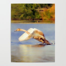 """""""On the Run""""  - Mute Swan Poster"""