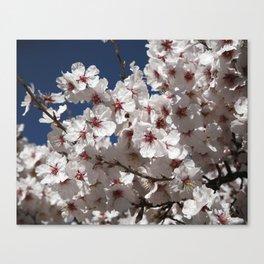 Almond Blossom Canvas Print