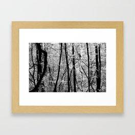 Forest (Pennsylvania) Framed Art Print
