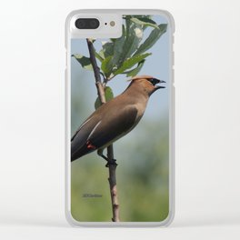 Cedar Waxwing at Hillsboro Pond Clear iPhone Case