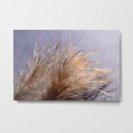 Feather close Metal Print