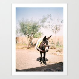 Cute donkey in the Agafay Desert of Morocco | Marrakech travel photography Art Print