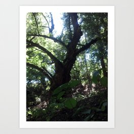 My Favorite Tree Art Print