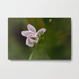 Blooming Bud - Original Botanical Nature Photography - Flora Art Metal Print