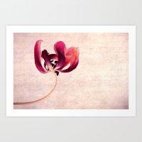 tulip Art Prints featuring Tulip by Claudia Drossert