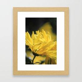 Yellow Flower in full bloom Framed Art Print