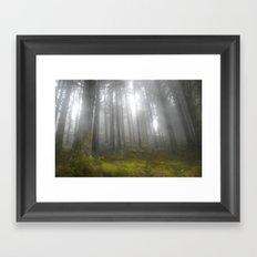 Fog in the undergrowth Framed Art Print