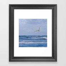 Terns diving into the sea Framed Art Print