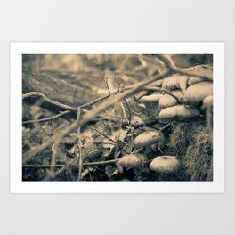 Mushrooms on a stump Art Print
