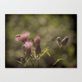 Thistle be the day Canvas Print