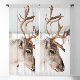 Reindeer with Antlers In Snow | Norway Tromsø Winter Art Print | Arctic Animal Travel Photography Blackout Curtain