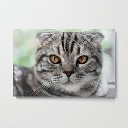 Cat by Mikhail Vasilyev Metal Print