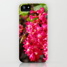 Bee and Blood Currant Ribes Sanguineum std iPhone Case