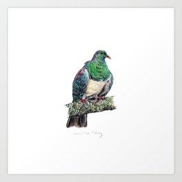 New Zealand Wood Pigeon Art Print