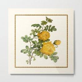 Rosa Sulfurea - Yellow Rose Square Metal Print