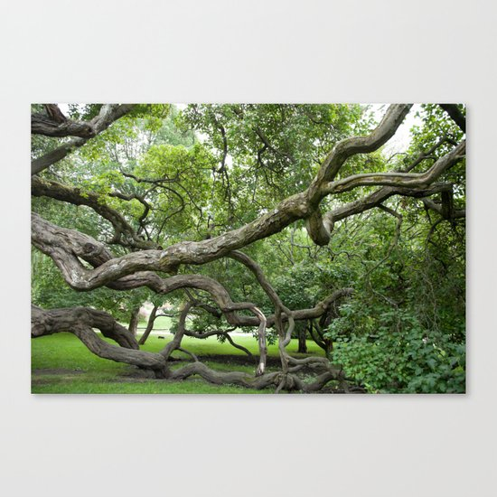 adapt or perish Canvas Print