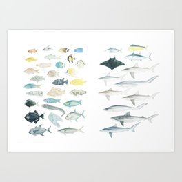 The Inhabitants of the Waters of Clipperton Atoll (both 1 and 2) Art Print
