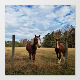 Two Horse Amigos in Pasture Canvas Print