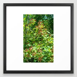 blackberry vine Framed Art Print