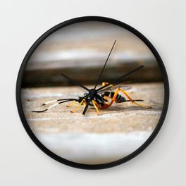 Parasitic Wasp Wall Clock