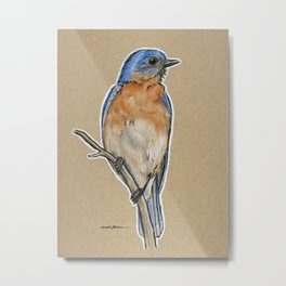 State Bird Series: Missouri - Eastern Bluebird Metal Print