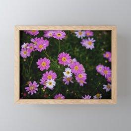 PINK CHAMOMILE Framed Mini Art Print