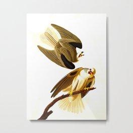 Black Winged Hawk Illustration Metal Print