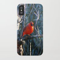 cardinal iPhone & iPod Cases featuring Cardinal by IcyBC