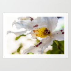 Orchid White Art Print