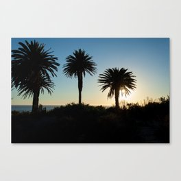 Sunset and trees Canvas Print
