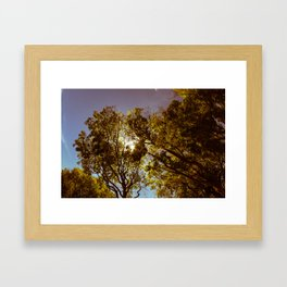 Forest Sun Framed Art Print