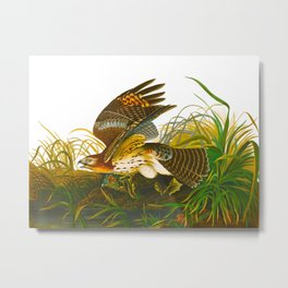 Winter Hawk Metal Print