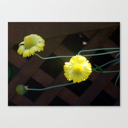 Yellow Floating Coneflower Canvas Print