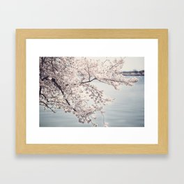 Cherry Blossoms of DC Edition 1 Photography Print Framed Art Print