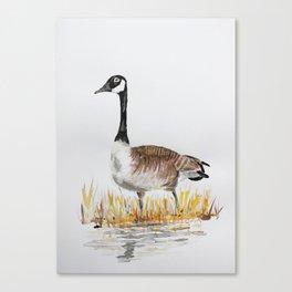 Bernache du Canada (Canada Goose) Canvas Print