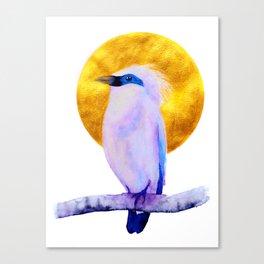 Bali Starling Canvas Print