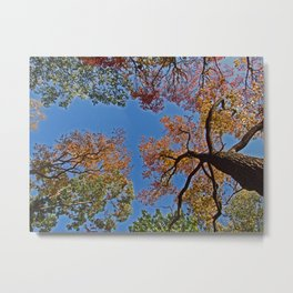 Canopy of Color Metal Print
