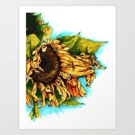 Sunflower in Summer Art Print