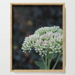 Softnest Against The Dark.  Flower garden photography Serving Tray