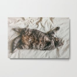 Fat lazy cat Metal Print
