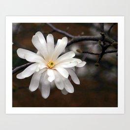 Magnolia I Art Print