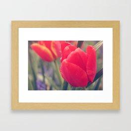 Tulip 4 Framed Art Print