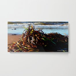 Sea Grass on the Beach Metal Print
