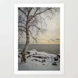 Curves of the Silver Birch by Teresa Thompson Art Print
