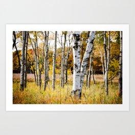 Birch Bottoms Art Print