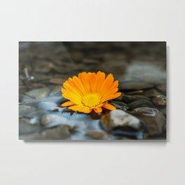 Flower Photography by amirali mirhashemian Metal Print