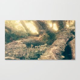 minishrooms Canvas Print
