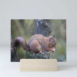 Red Squirrel Mini Art Print