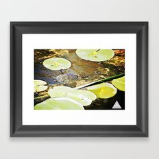 Turtle Talent 2 of 3 Framed Art Print